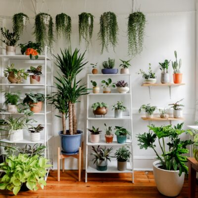 Indoor Plants You Need During isolation